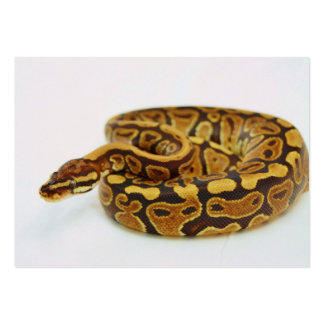 Yellow and Black Ball Python Business Cards