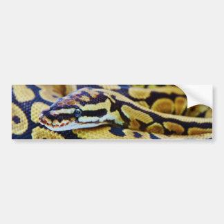 Yellow and Black Ball Python Resting Bumper Sticker