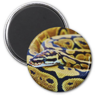 Yellow and Black Ball Python Resting Magnet