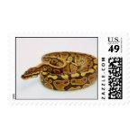 Yellow and Black Ball Python Stamp