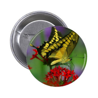 Yellow and Black Butterfly Button