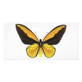 Yellow and Black Butterfly Card