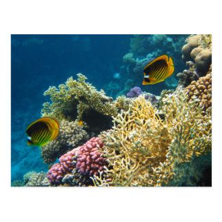 Yellow and Black Butterfly Fish Postcard