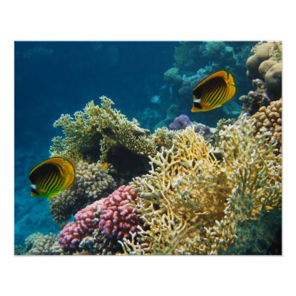 Yellow and Black Butterfly Fish Print