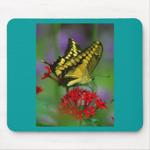 Yellow and Black Butterfly Mouse Pads