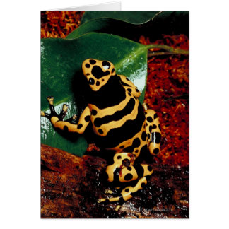 Yellow and Black Frog Card