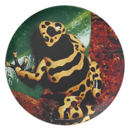 Yellow and Black Frog Dinner Plate