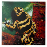 Yellow and Black Frog Large Square Tile