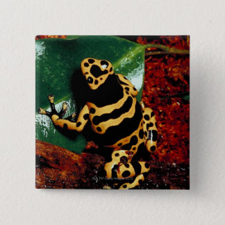 Yellow and Black Frog Pinback Button