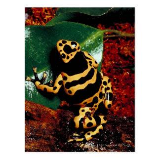 Yellow and Black Frog Postcard