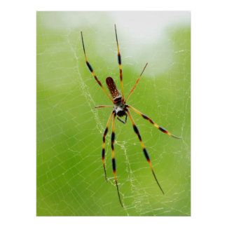 Yellow and Black Spider (Green Background) Poster