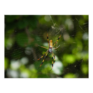 Yellow and Black Spider Poster