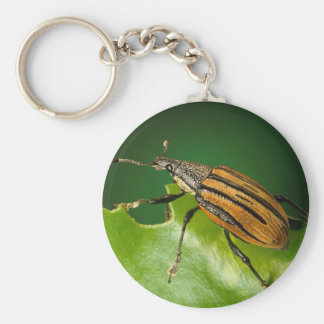 Yellow and black  striped weevils bettle keychain