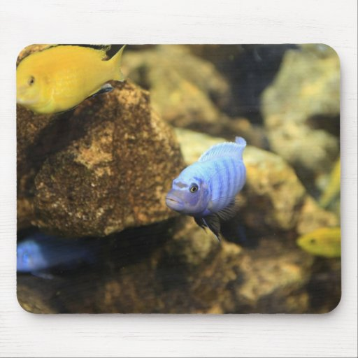 Yellow and Blue Ciclid Reef Fish Mousepad