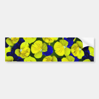 Yellow and blue pansies bumper stickers