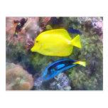 Yellow and Blue Tang Fish Postcard