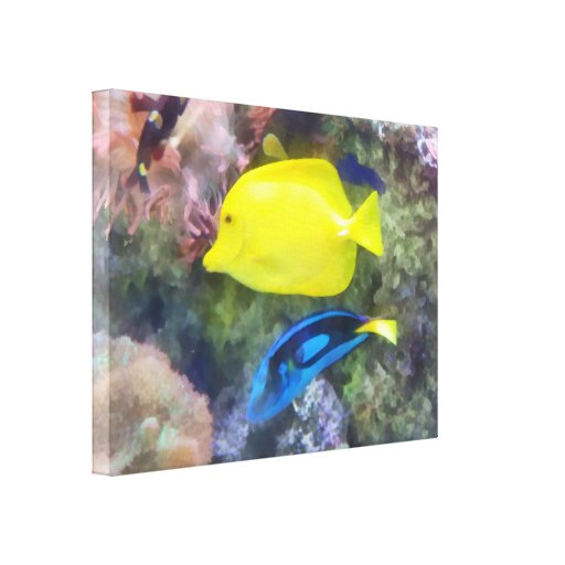 Yellow and Blue Tang Fish Stretched Canvas Prints