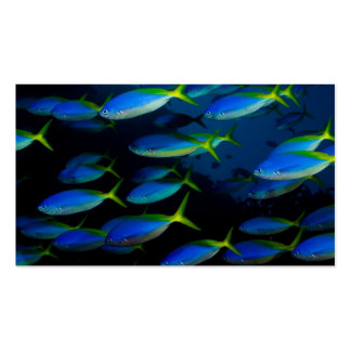 Yellow and blueback fusil fish in Fiji Business Card