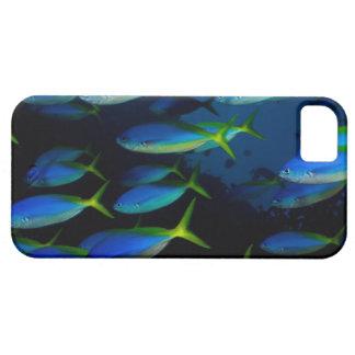 Yellow and blueback fusil fish in Fiji iPhone 5/5S Case