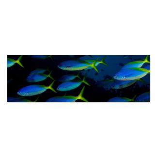 Yellow and blueback fusil fish in Fiji Mini Business Card