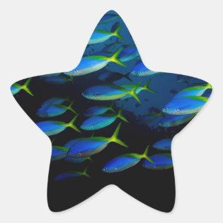 Yellow and blueback fusil fish in Fiji Star Sticker