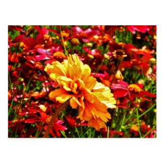 Yellow and Bright Pink Wild Flowers Postcard