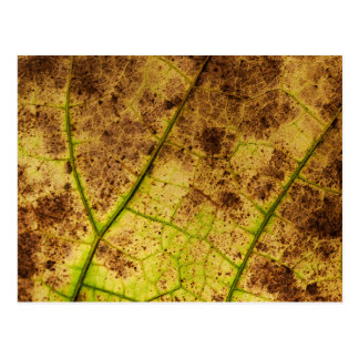 Yellow and Brown Dry Dying Leaf Postcard