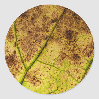 Yellow and Brown Dying Macro Leaf Round Stickers