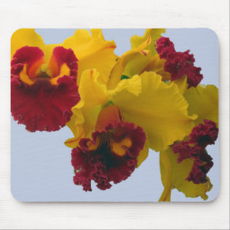 Yellow and Deep Red Orchids Mouse Pad