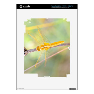 Yellow and gold dragonfly iPad 3 skin
