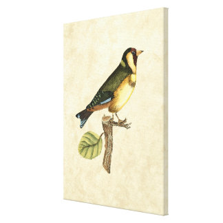 Yellow and Green Bird Perched on a Little Branch Canvas Print