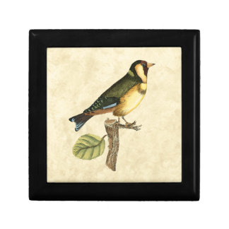 Yellow and Green Bird Perched on a Little Branch Gift Box