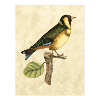 Yellow and Green Bird Perched on a Little Branch Postcard