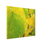 Yellow and Green Redbud Leaves Autumn Nature Canvas Print