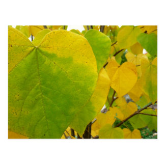 Yellow and Green Redbud Leaves Autumn Nature Postcard