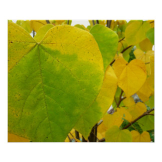 Yellow and Green Redbud Leaves Autumn Nature Poster