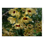Yellow and Maroon Orchids Elegant Floral Photo Card