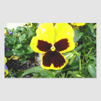 Yellow And Maroon Pansy Rectangle Stickers