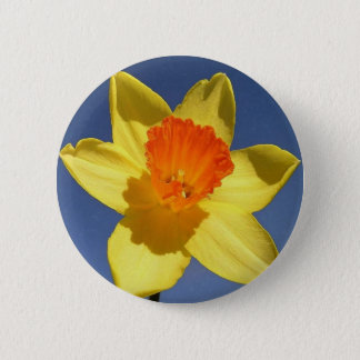 Yellow and Orange Colored Daffodil Button