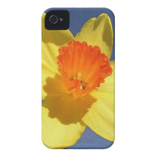Yellow and Orange Colored Daffodil iPhone 4 Case