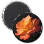 Yellow and Orange Rose Magnet