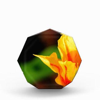 Yellow and Orange Tulip Award