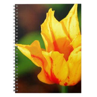Yellow and Orange Tulip Notebook