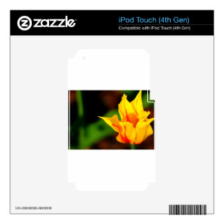 Yellow and Orange Tulip Skins For iPod Touch 4G