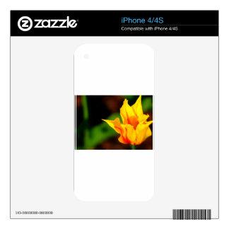 Yellow and Orange Tulip iPhone 4 Decal