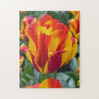 Yellow and orange tulips photo puzzle