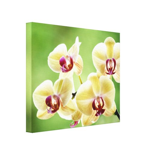 Yellow and Pink Orchid Flowers Canvas Print