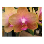 yellow and pink orchid post card