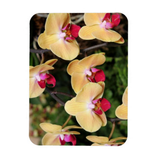 Yellow and Pink Orchids  Photo Magnet