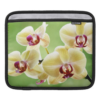 Yellow and Pink Orchids Sleeve For iPads